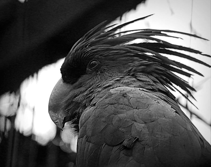 shaggy parrot 20061012230621718616843971