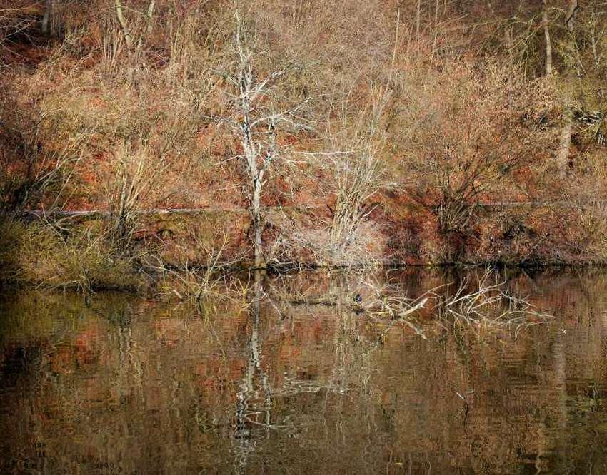 Reflet d'étang et berges 20062212261121718616867122