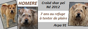HOMERE  -  croisé Griffon/ sharpeï  roux 9 ans (8 de refuge)   -  ARPA  A  RIS  ORANGIS  (91) 20071403201224395716918902