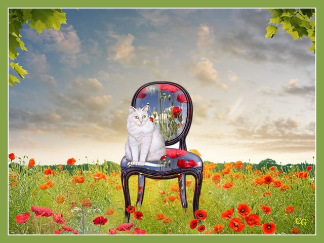 Animaux : Chats Y2uVJb-AA-C105