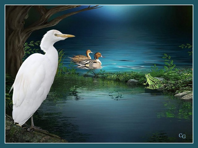 Oiseaux III ABaWJb-Oiso-C301