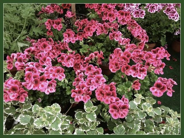 Fleurs I SCkYJb-Flower-102-B