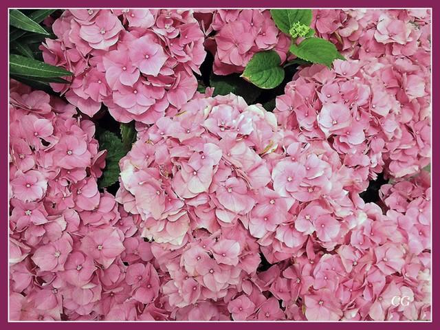 Fleurs I SCkYJb-Flower-103-B