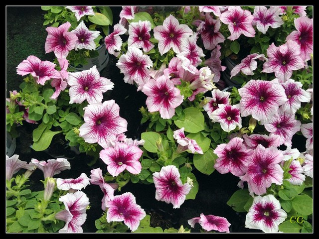 Fleurs I XnoYJb-Flower-104-B