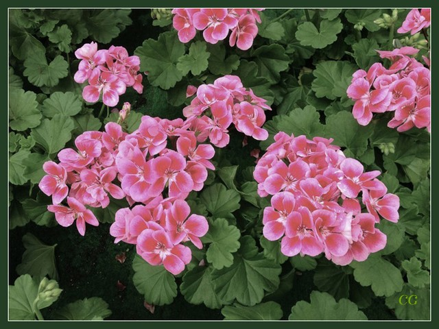 Fleurs I XnoYJb-Flower-105-B
