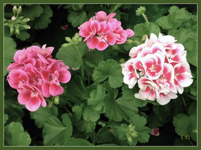 Flower-106-B