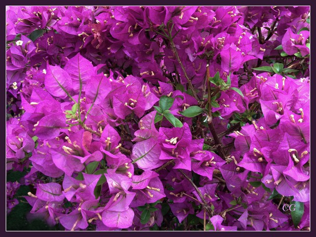 Fleurs 1 YnoYJb-Flower-108-B