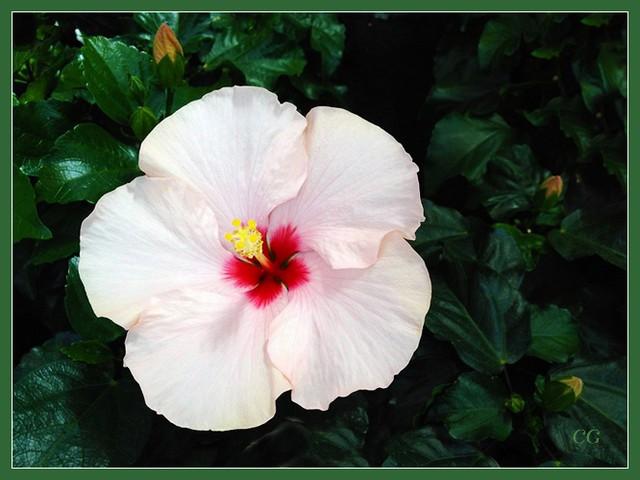 Flower-109-B