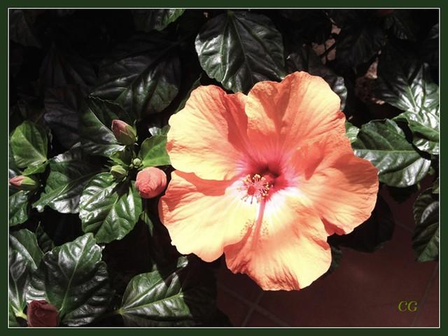 Flower-111-B