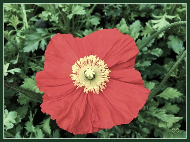 Flower-112-B