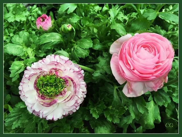 Flower-113-B