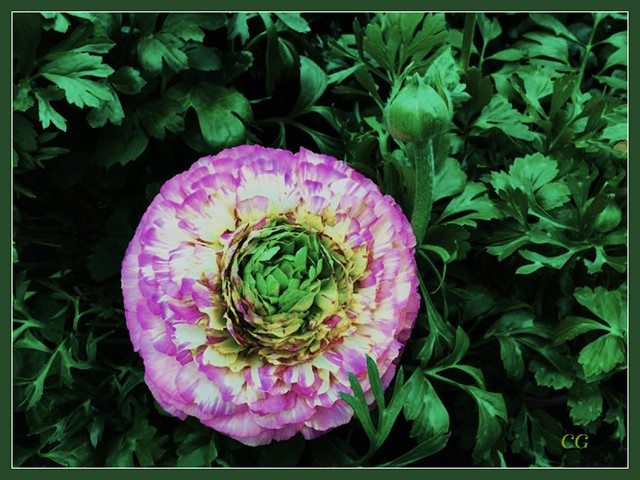 Flower-114-B