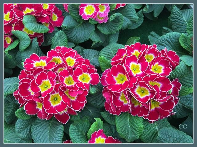 Flower-115-B