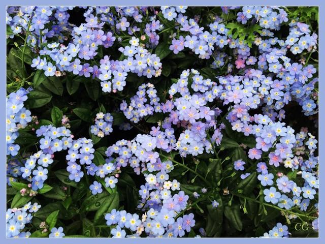 Flower-118-B