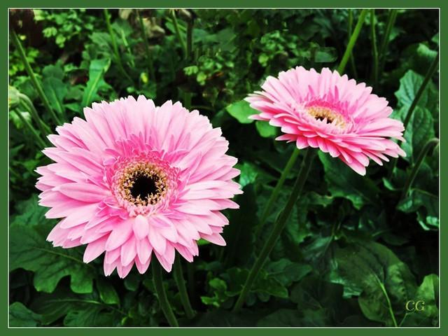 Fleurs 2 BooYJb-Flower-119-B