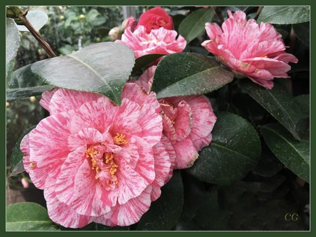 Fleurs 2 CooYJb-Flower-124-B