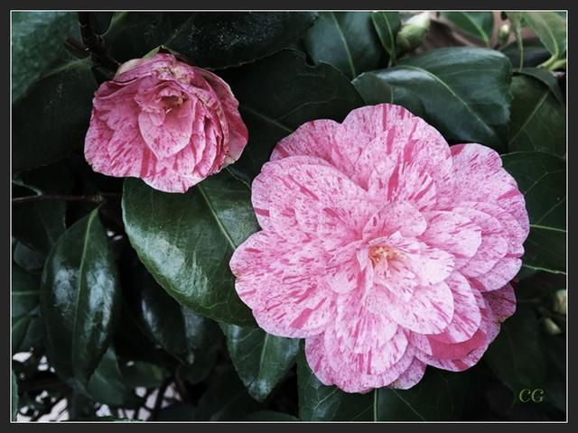 Fleurs 2 DooYJb-Flower-125-B