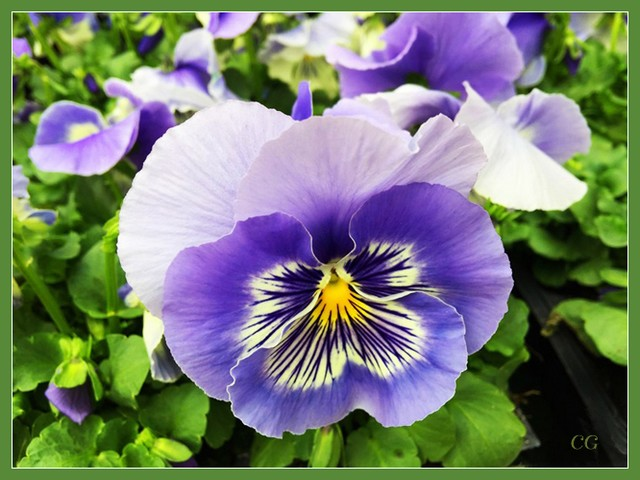 Fleurs 2 DooYJb-Flower-126-B