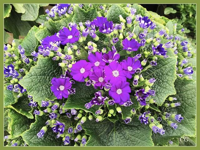 Fleurs 2 DooYJb-Flower-127-B