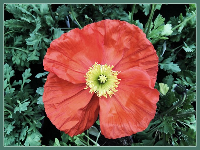 Fleurs 2 DooYJb-Flower-128-B