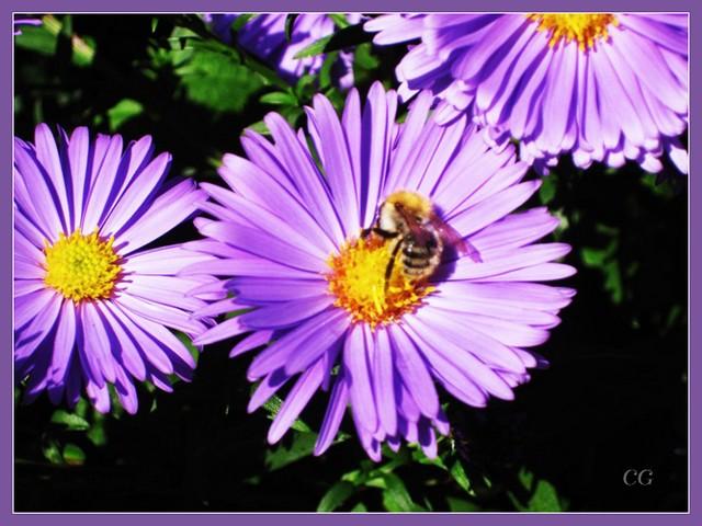 Fleurs 3 EooYJb-Flower-129-B