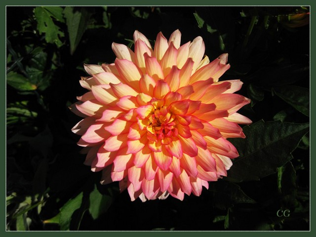 Fleurs III EooYJb-Flower-130-B