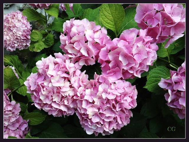 Fleurs III FooYJb-Flower-133-B