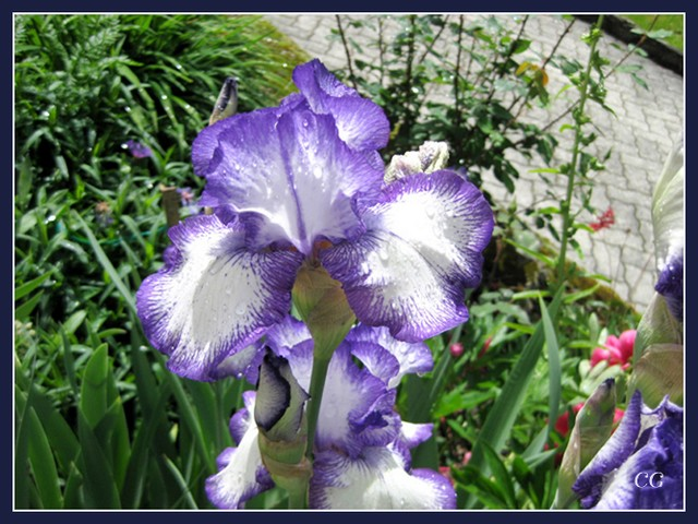 Fleurs III FooYJb-Flower-134-B