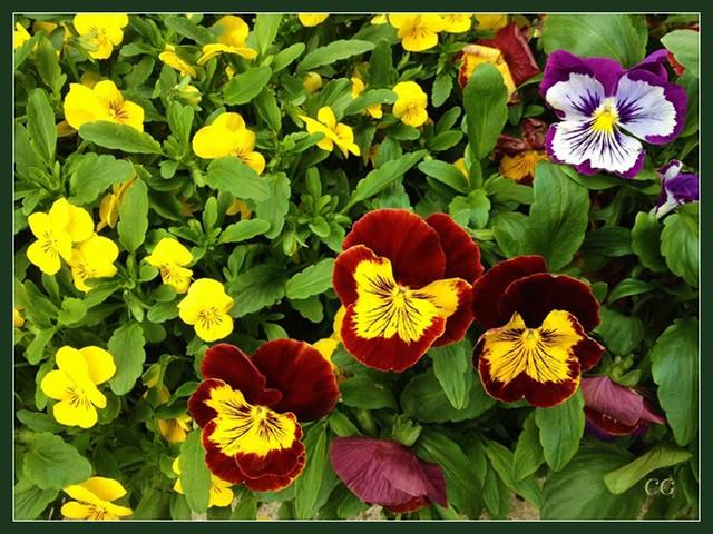 Fleurs III GooYJb-Flower-136-B