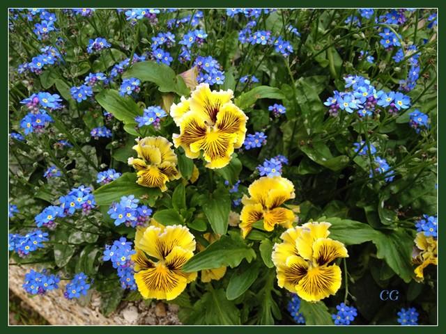 Fleurs 3 GooYJb-Flower-137-B