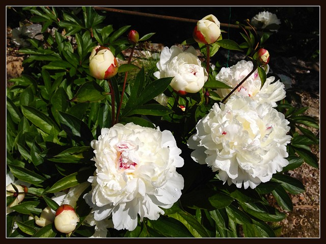 Fleurs III GooYJb-Flower-138-B