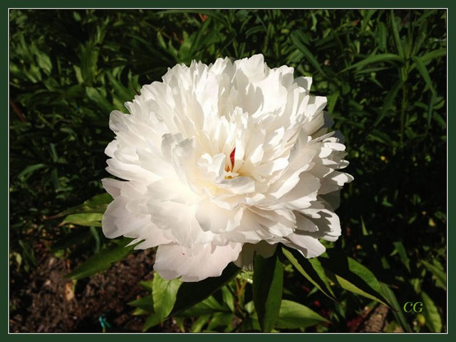 Flower-140-B