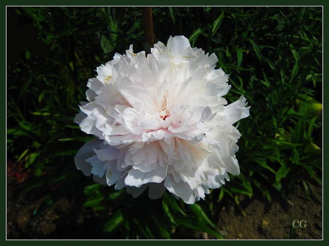 Fleurs III HooYJb-Flower-141-B