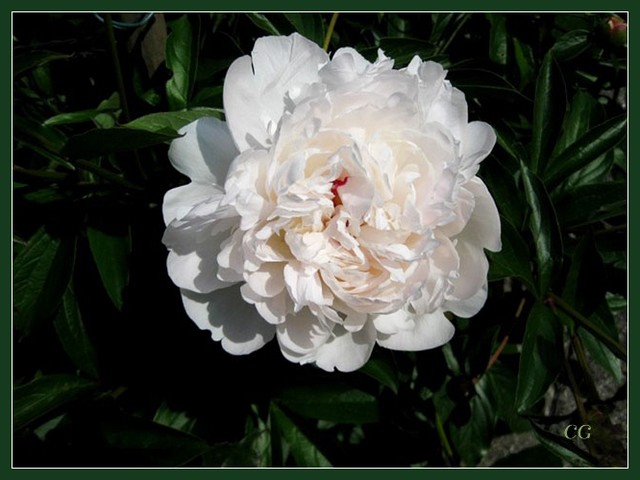 Fleurs III HooYJb-Flower-142-B
