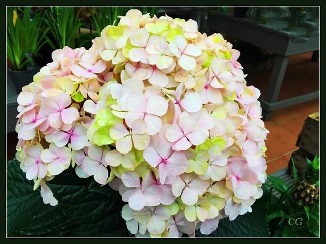 Fleurs IV IooYJb-Flower-145-B