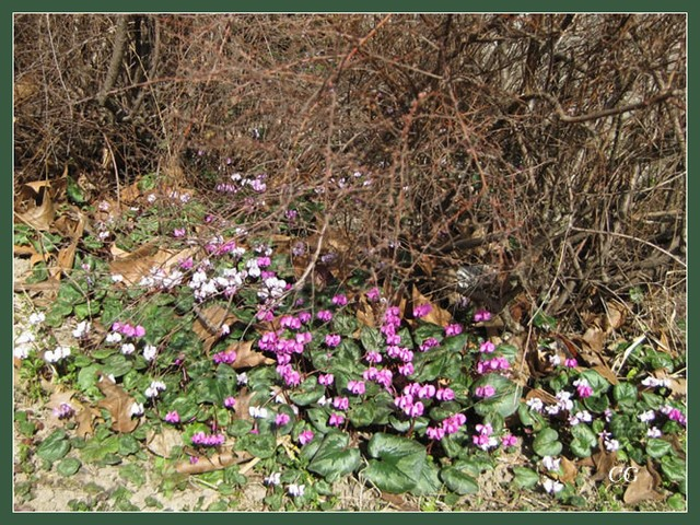 Fleurs IV JooYJb-Flower-147-B