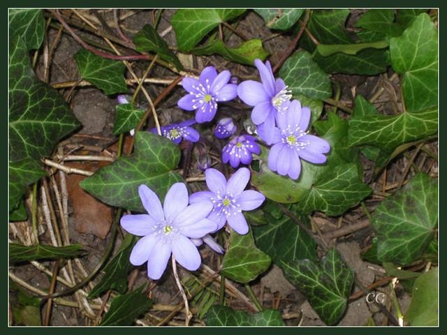 Fleurs IV JooYJb-Flower-149-B