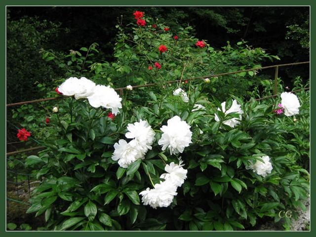 Fleurs IV JooYJb-Flower-150-B