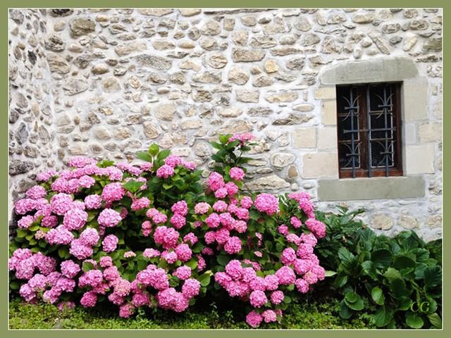 Fleurs IV KooYJb-Flower-151-B