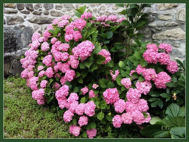 Fleurs IV KooYJb-Flower-152-B