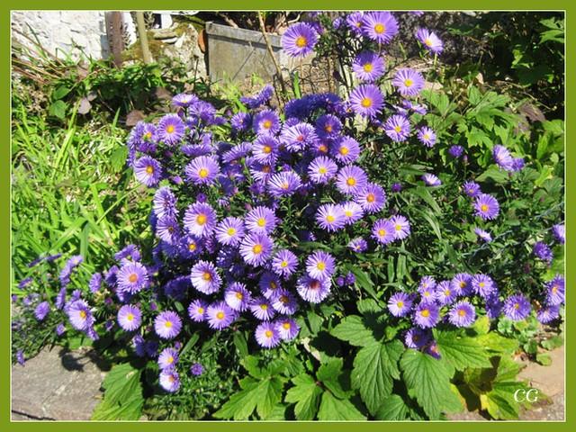 Fleurs IV VroYJb-Flower-154-B
