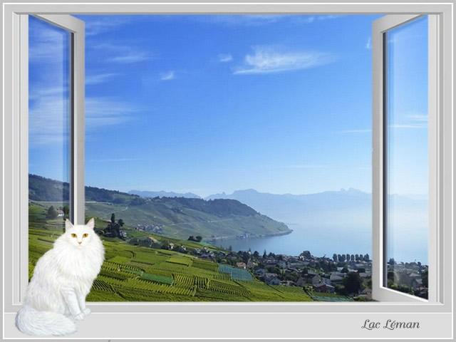 Fenêtre avec vue I UTnZJb-0-Leman-A