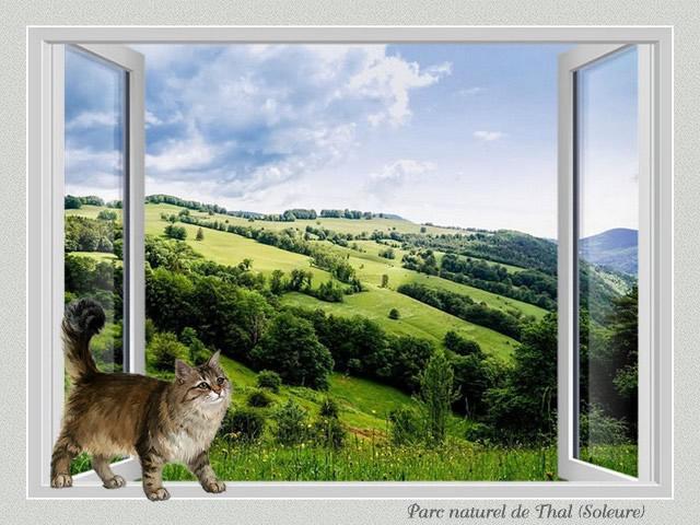 Fenêtre avec vue II 8Q1aKb-CH2-SO-201