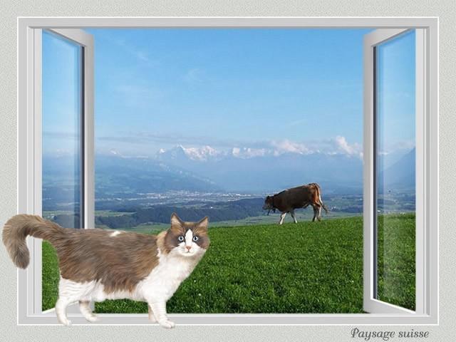 Fenêtre avec vue IV HN7bKb-CH4-106