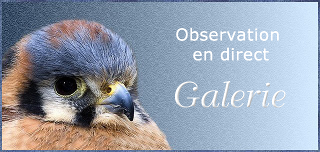 Galerie : Nids (Europe) GUF6Kb-Obs-103