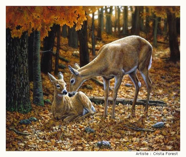 FOREST Crista YYtBKb-Forest-201