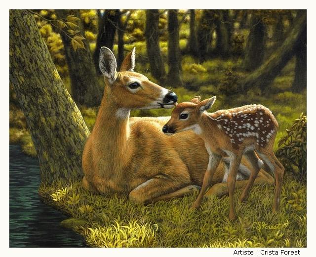 FOREST Crista ZYtBKb-Forest-204