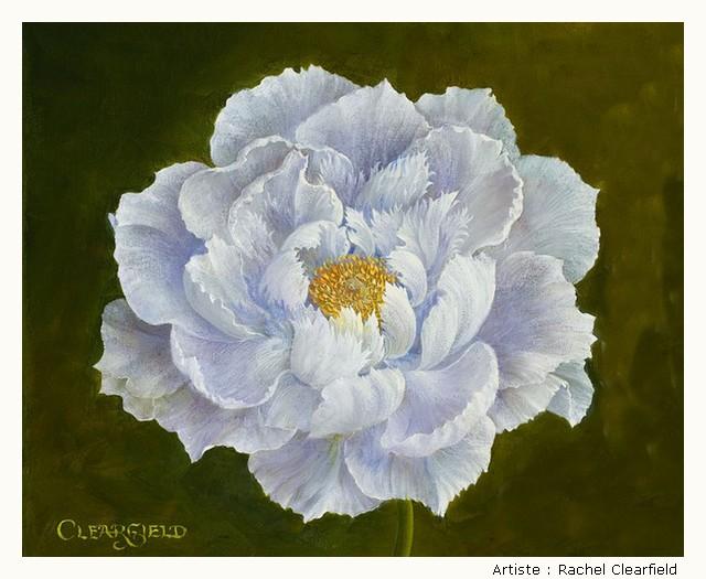 CLEARFIELD Rachel RQOCKb-Clearfield-104