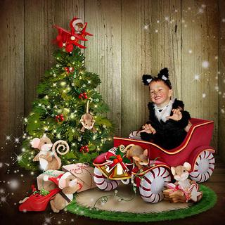 THE WINTER OF THE LITTLE MICE - lundi 23 novembre / monday november 23 th 20112310591719599817139699