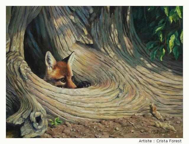 FOREST Crista HtIIKb-Forest-207